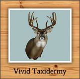 vivid_taxidermy